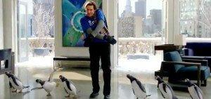 pinguini-mr-popper
