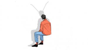 libro scarafaggi di vetro